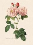 L-133-damask-perpetual-quatre-saisons-d-italie-rose-pink